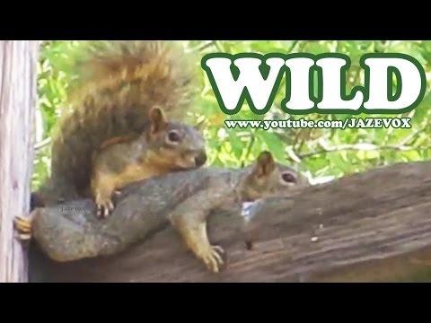 Two Cute Squirrels In The Wild – Weird Strange Funny Wildlife Animals [Short Version Video] Jazevox