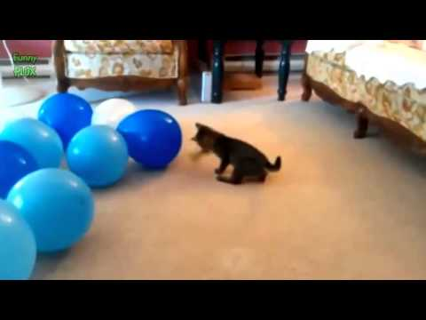 Funny Cats vs Balloons Compilation 2014