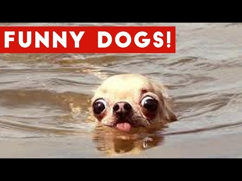Top 50 Funny Dog Videos That Are Guaranteed To Make You Smile | Funny Pet Videos