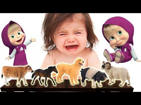 BAD BABY CRYING   Masha and Real Farm Animals – Dog, Pig, Horse, Sheep   Finger Family Song