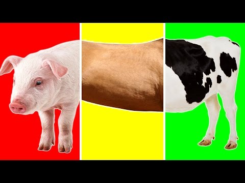 Farm Animals with Wrong Body   Funny Animals Video for Kids   Learn Farm Animals