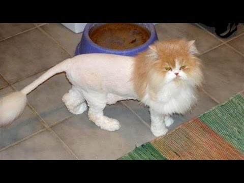 TRY NOT TO LAUGH or SMILE – Super FUNNY CAT videos