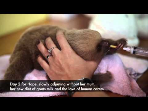 Funny Wild Animal Baby Video