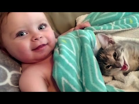 Funny Cat and Baby Videos Compilation (2017)