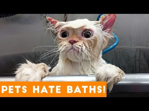 Funniest Pets Hate Taking Baths Home Videos of 2017 Compilation   Funny Pet Videos