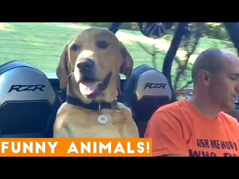 Funniest Pets of the Week Compilation January 2018   Funny Pet Videos