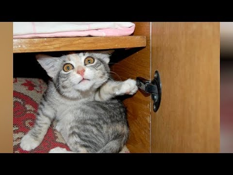 LAUGH extremely hard at FUNNY ANIMALS – Funny ANIMAL VIDEOS compilation