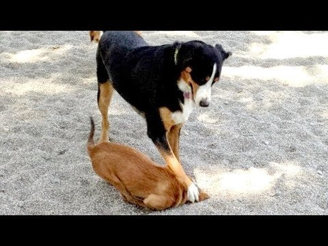 Just look at ALL THE WAYS how DOGS DIG HOLES – You have NO IDEA HOW FUNNY THIS IS!