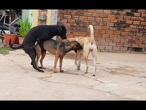 Funny Dogs Compilation Video Next to My House
