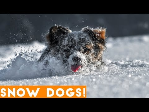 Funniest Snow Dog Video Compilation December 2018   Funny Pet Videos