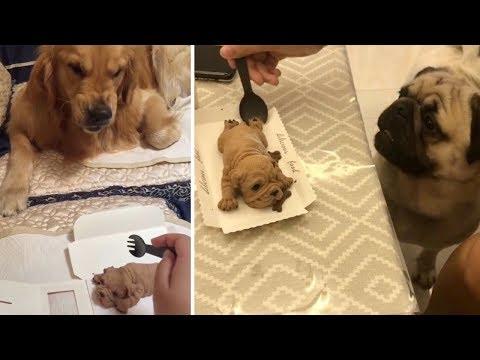 Funny Dog Reaction to Dog Cake   Funny Dog Cake Reaction Compilation