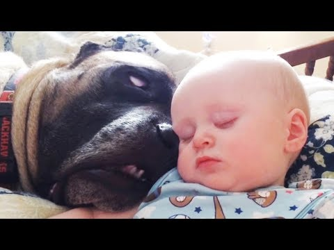 Funny Babies and Dogs are Best Friends – Fun and Fails Baby Video