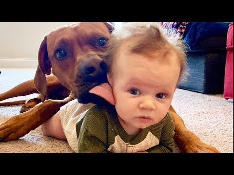 Funny Naughty Dogs Playing With Baby – Cute Baby and Dogs Video