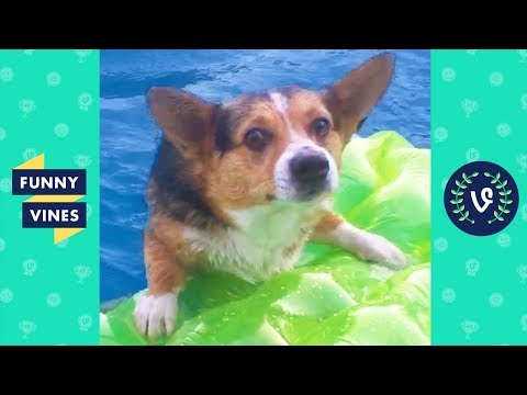 TRY NOT TO LAUGH – Cute DOG Videos | Funny Videos January 2019
