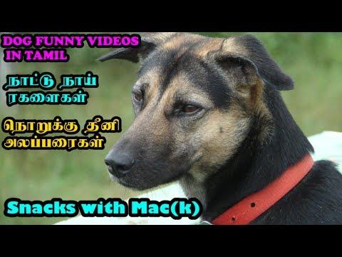 நாட்டு நாய் ரகளைகள் – நொறுக்கு தீனி அலப்பரைகள் –  Funny Dog Videos in Tamil