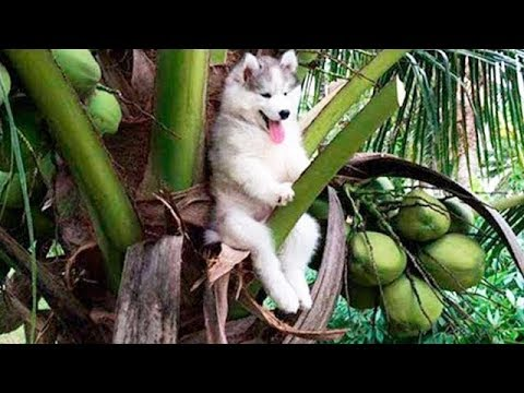 Cute Cats and Dogs 2019 ✪ Best Funny Pet Videos #12