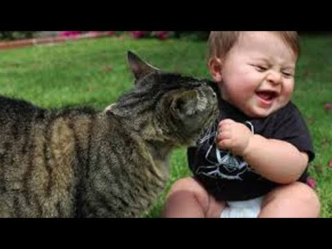 Cute Cats and Dogs 2019 ✪ Best Funny Pet Videos #11