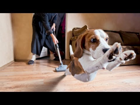 Funny moment when dog naughty with vacuum cleaner | Top Dog Video