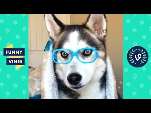 TRY NOT TO LAUGH – Cutest Animals of the Week! | Funny Videos 2019