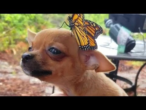 🤣 Funniest Cats 😻 and Dogs 🐶 Awesome Funny Pet Animals' Life Videos 😇