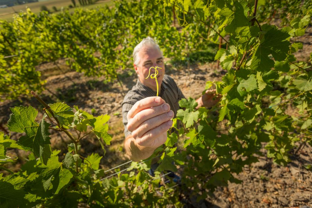 Oregon Winemaker Tony Rynders of Tendrils Wine in Carlton, Oregon.