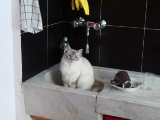 Coco in my kitchen sink...