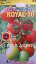 TOMAT ROYAL 58
