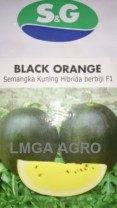SEMANGKA BLACK ORANGE