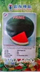 Benih semangka Non Biji, Semangka Prime, Jual Semangka Prime Murah, Semangka Prime Terbaru, Semangka Lonjong Prime, Semangka Prime Murah, Lmga Agro