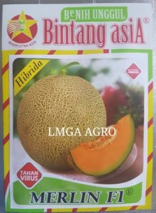 MELON MERLIN, JUAL BIBIT MELON MERLIN, BENIH MELON MERLIN F1, LMGA AGRO