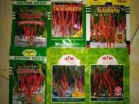 jual benih murah, cabe merah keriting, budidaya cabe, lmga agro