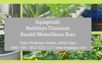 aquaponik,budidaya tanaman,budidaya,tanaman,hidroponik,benih,bibit,cabe,tomat