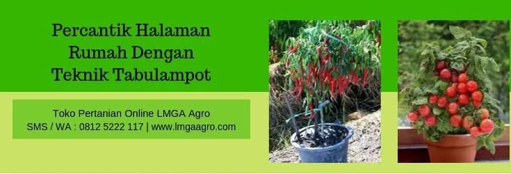 Tabulampot,budidaya,pertanian,pot,solusi,rumah,tanaman,buah,tanaman buah