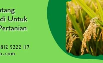 10 fakta tentang tanaman padi,tanaman padi,budidaya tanaman,padi,lmga agro