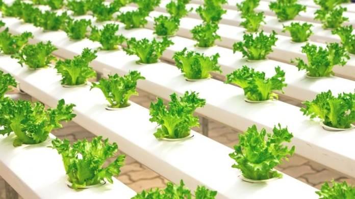 Organics, hydroponics or aquaponics