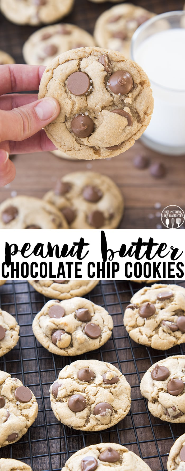 eanut butter chocolate chip cookies have a scrumptious peanut butter cookie and are packed full of chocolate chips for the ultimate peanut butter and chocolate perfection!