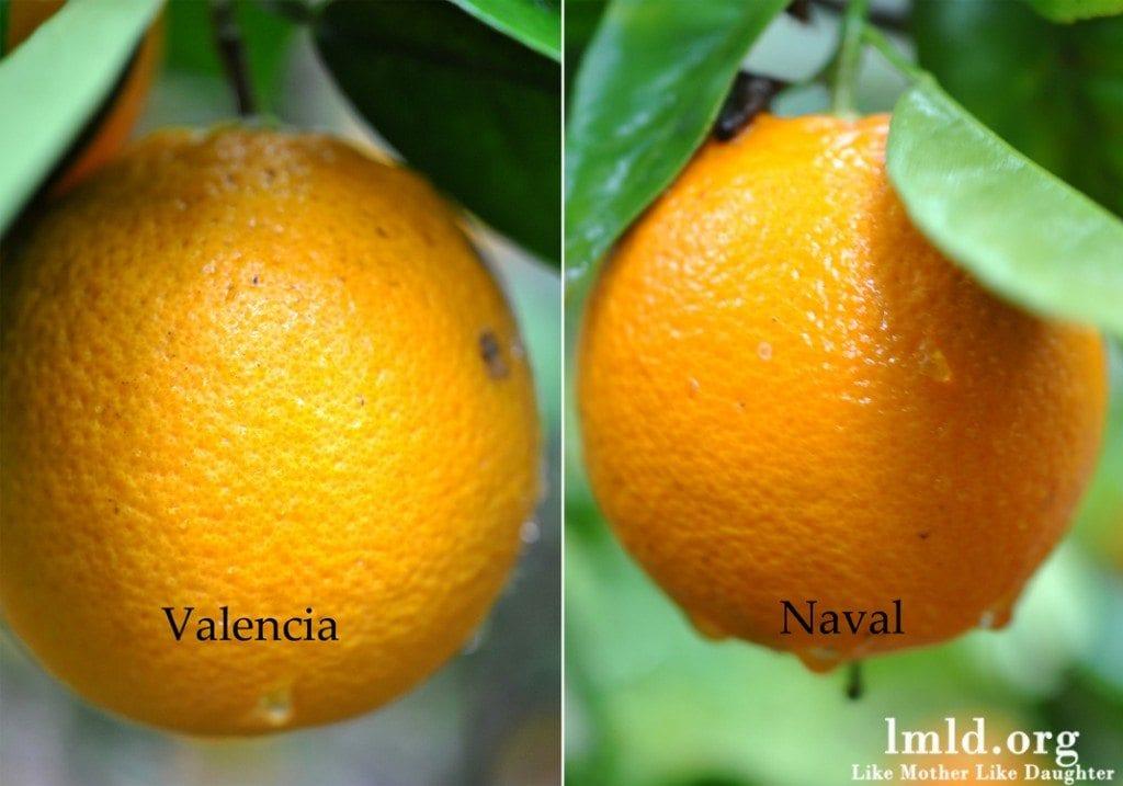 Orange Berry Smoothie