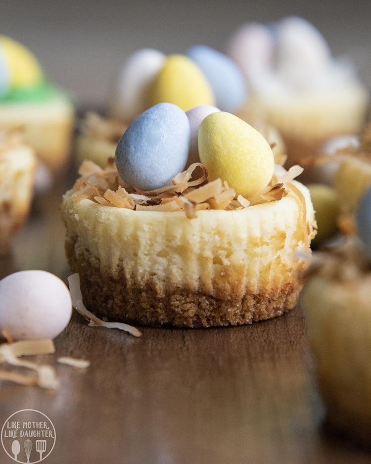 Mini Cheesecakes topped to look like a bird nest
