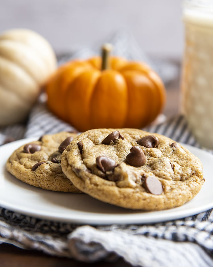 Two chewy pumpkin chocolate chip cookies on a white plate with small pumpkins behind.