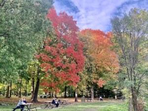 Parc Angrignon à Montréal en octobre par LM Montréal