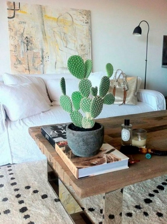 11 Lovely Small Cactus Ideas For Interior Decorations 07