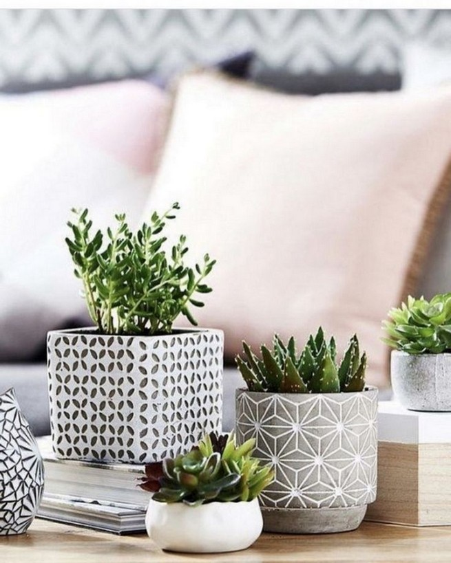 11 Lovely Small Cactus Ideas For Interior Decorations 16