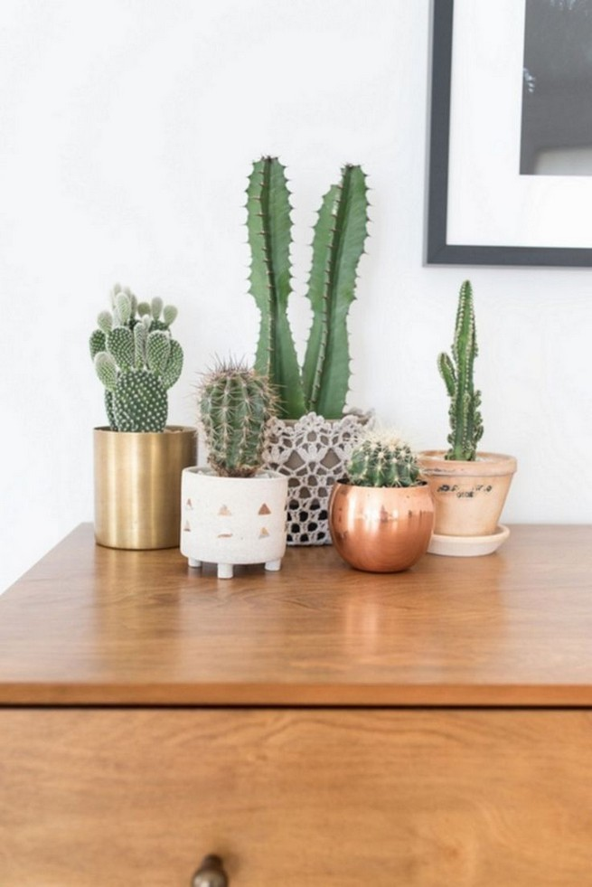 11 Lovely Small Cactus Ideas For Interior Decorations 17