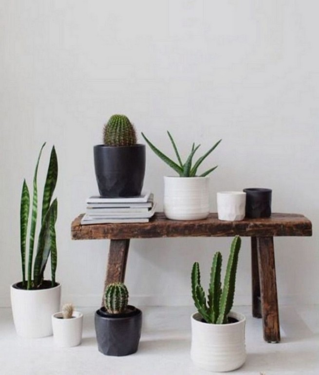 11 Lovely Small Cactus Ideas For Interior Decorations 24