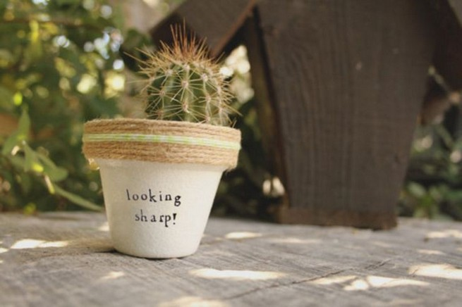 11 Lovely Small Cactus Ideas For Interior Decorations 26