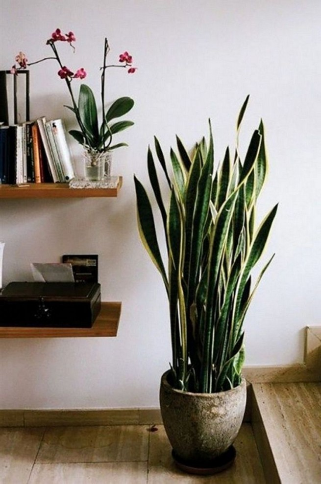 11 Lovely Small Cactus Ideas For Interior Decorations 30