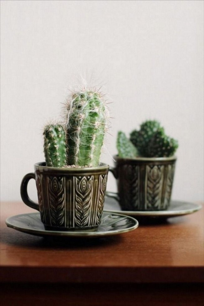 11 Lovely Small Cactus Ideas For Interior Decorations 34