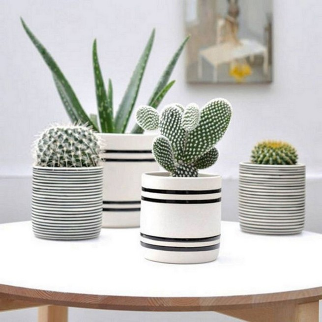 11 Lovely Small Cactus Ideas For Interior Decorations 36