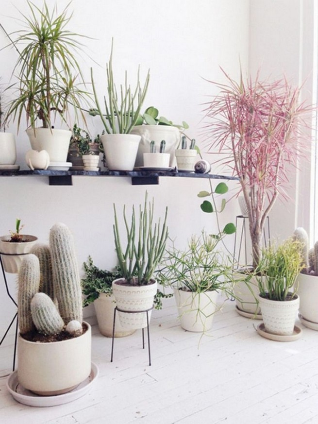 11 Lovely Small Cactus Ideas For Interior Decorations 38