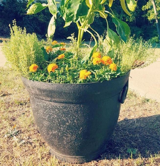 21 Best Container Vegetables Garden Inspirations Ideas 17